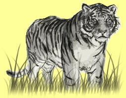 tiger5a